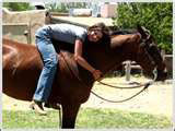 horse-training-methods-2