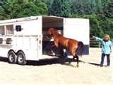 trailer-training-a-horse1